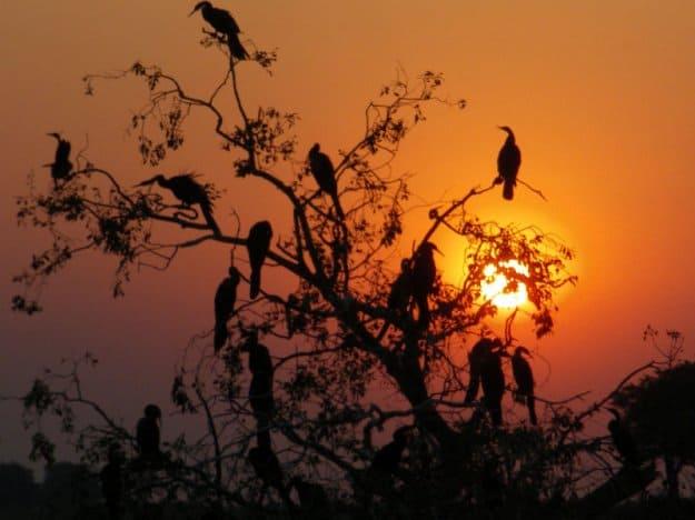 África do Sul, Botswana, Zâmbia, Malawi, Zimbabwe, Moçambique: Odisseia no Trópico de Capricórnio, Cristina Chabert, 2009