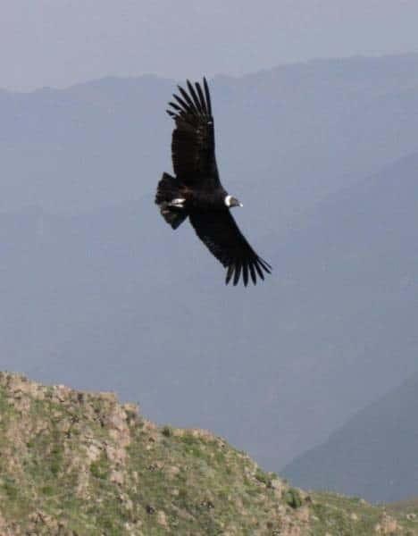 De Macchu Pichu ao Lago Titicaca, Peru