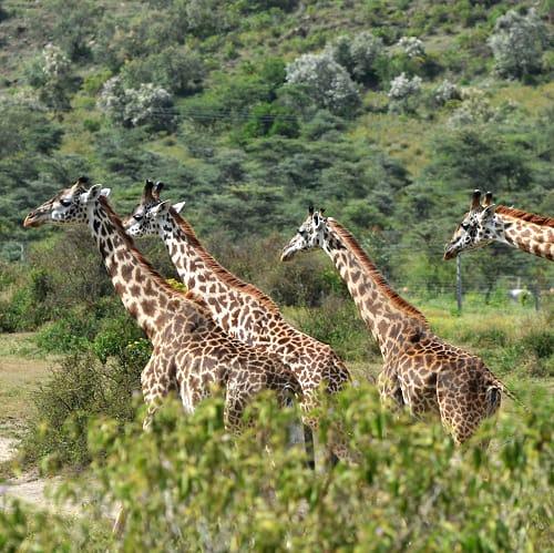 África do Sul, Suazilândia, Do Parque Kruger ao Cabo da Boa Esperança