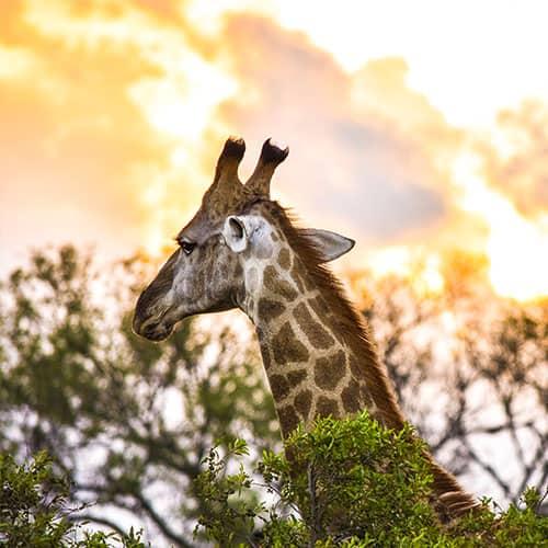 Do Parque Kruger ao Cabo da Boa Esperança