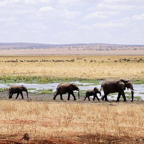 Do Deserto Kalahari ao Delta do Okavango