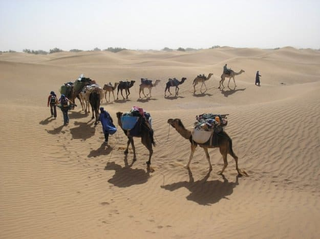 Marrocos: Caravana de Camelos, Paula Ramusga, 2008